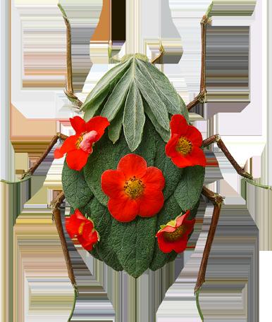 Insect Garden Ladybug