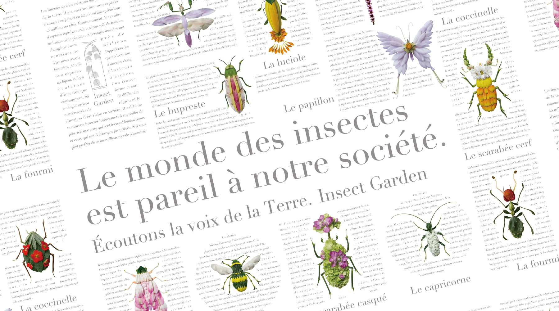 INSECT GARDEN Encyclopédie séries